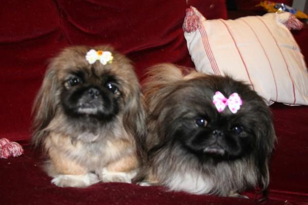 Cindy et Franny